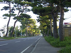 Akamatsu (Japanese red pine) Highway