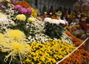 Obihiro Chrysanthemum Festival, from late October to early November