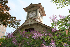 Sappro Clock Tower