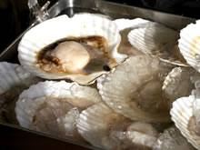 Scallop with shell